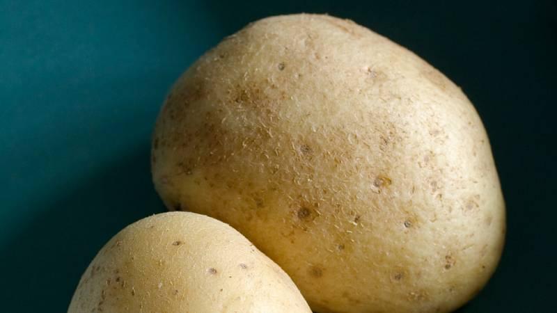 Las patatas transgénicas llegan a Estados Unidos