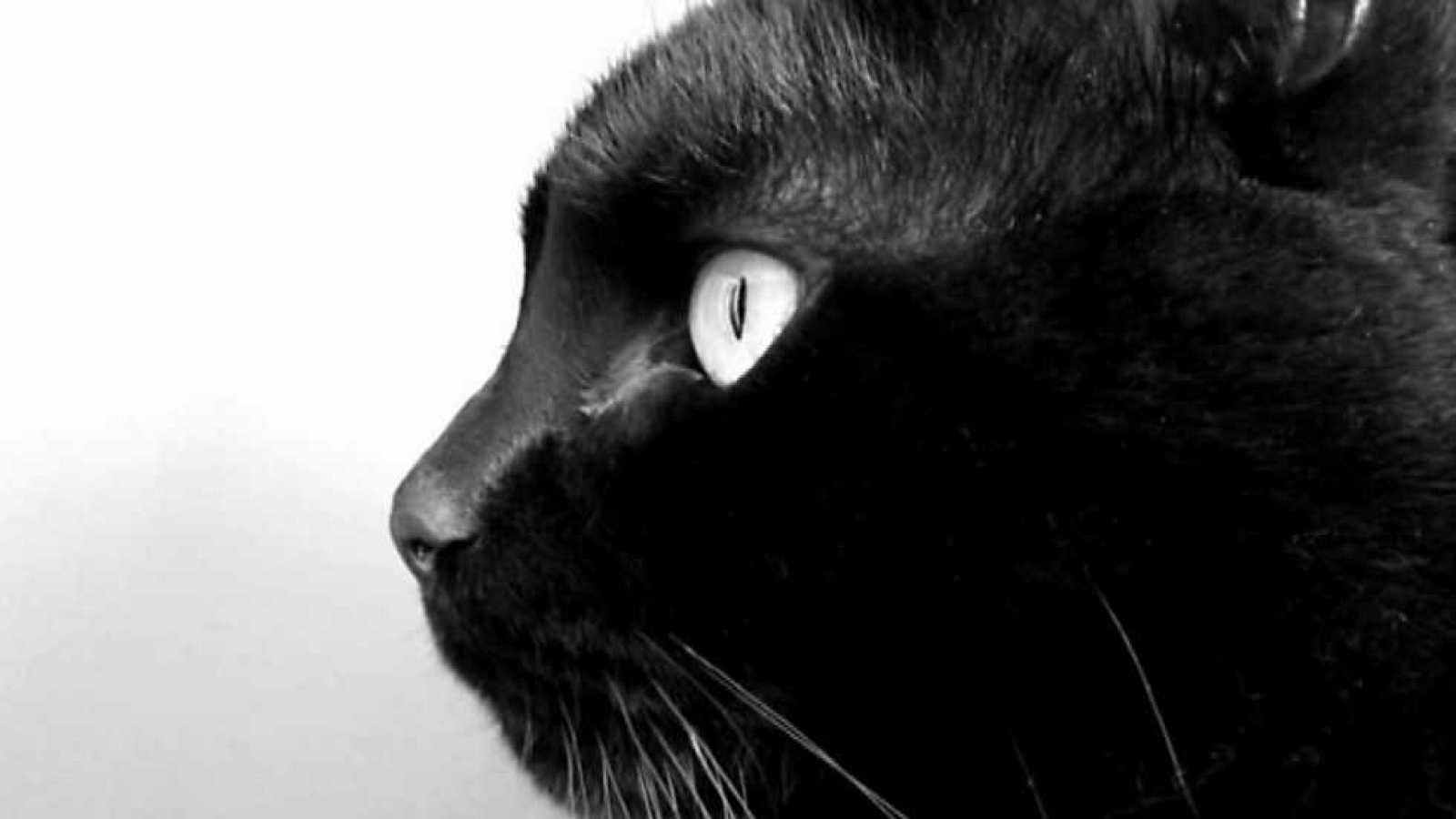 tres14 - Perros y gatos - ver ahora