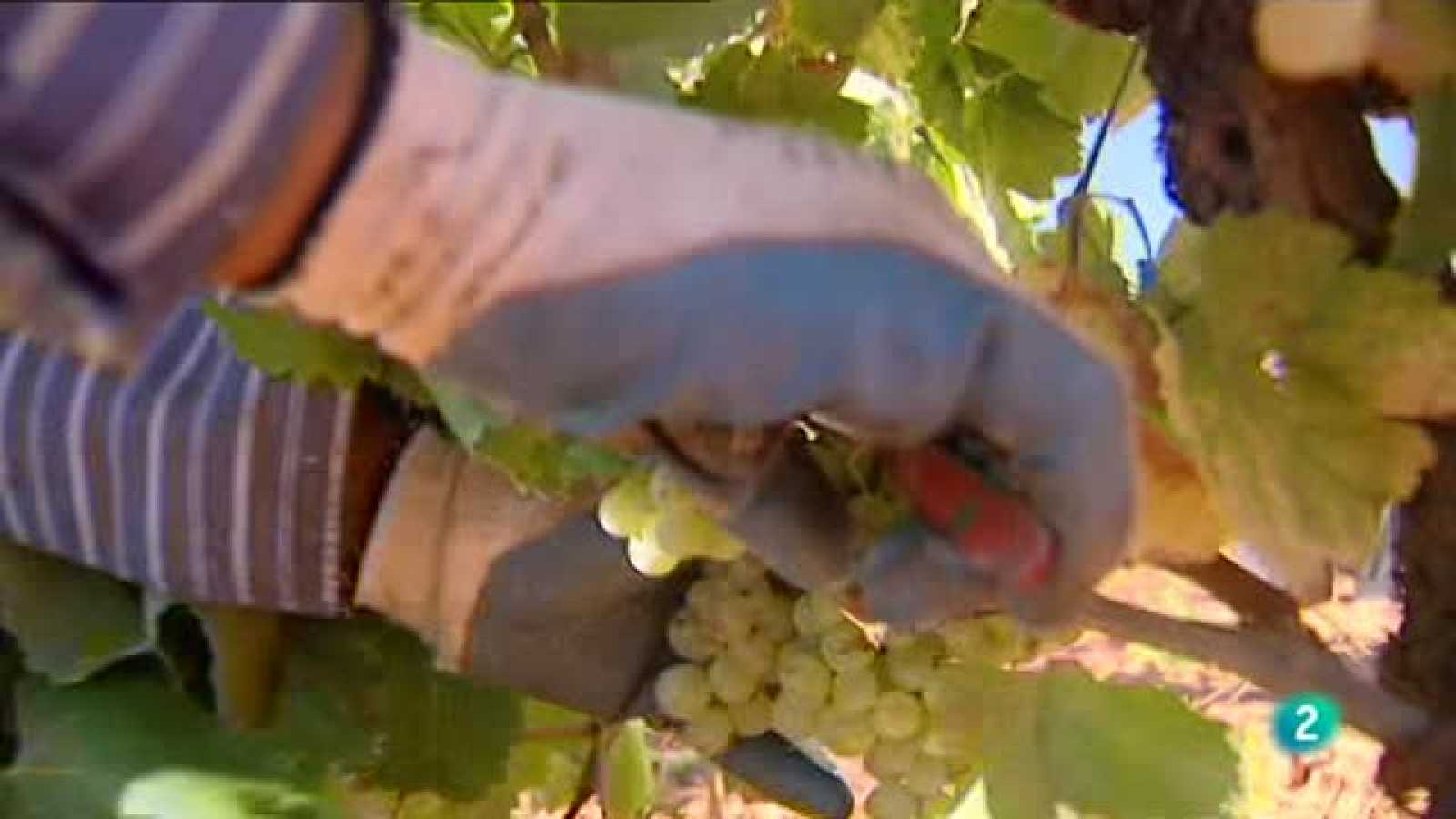 Agrosfera - Laboratorio de ideas - Robot vitivinicola