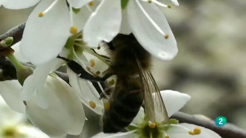 La Aventura del Saber. Apiterapia Apitoxina miel jalea real