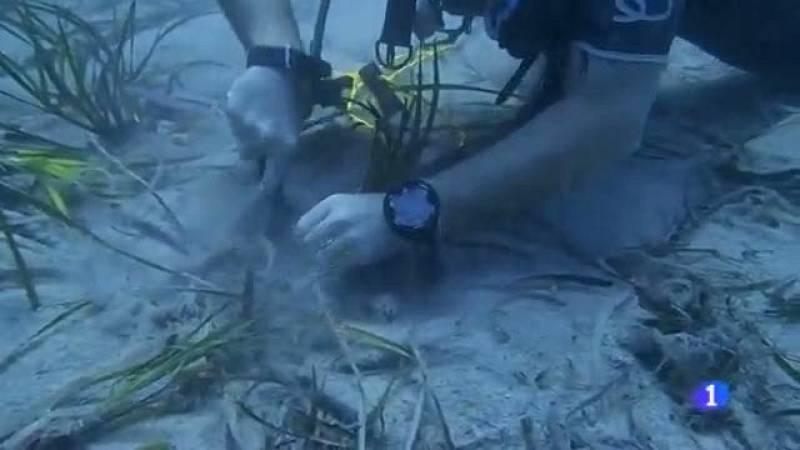 Cultivar posidònia per cultivar el fons marí.
