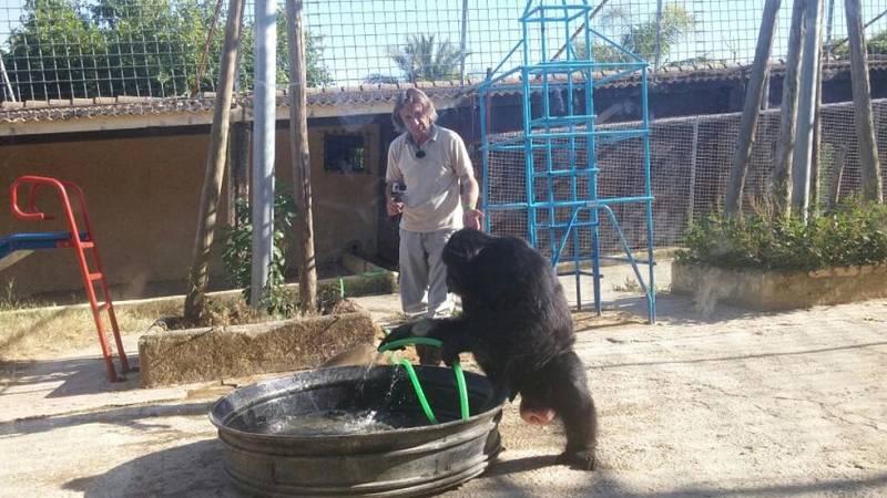 El hombre que se bañaba con chimpancés
