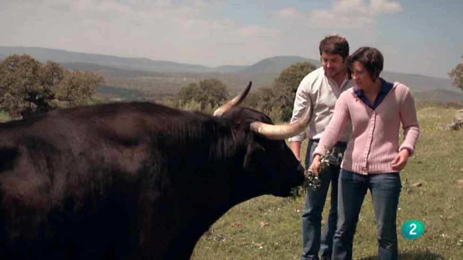 Con mis ojos - Extremadura - Ver ahora