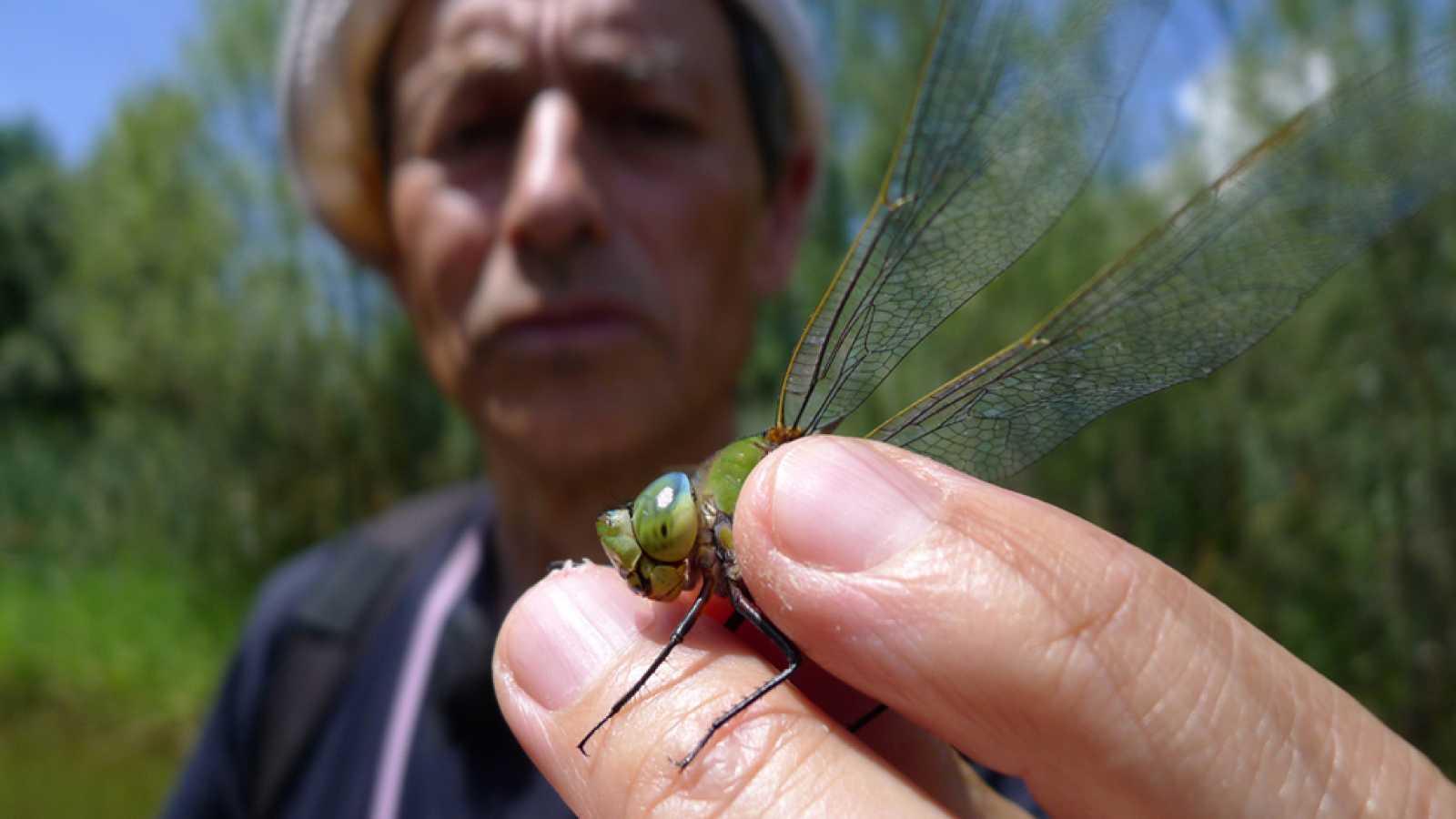 Las libélulas, unas pequeñas superheroínas