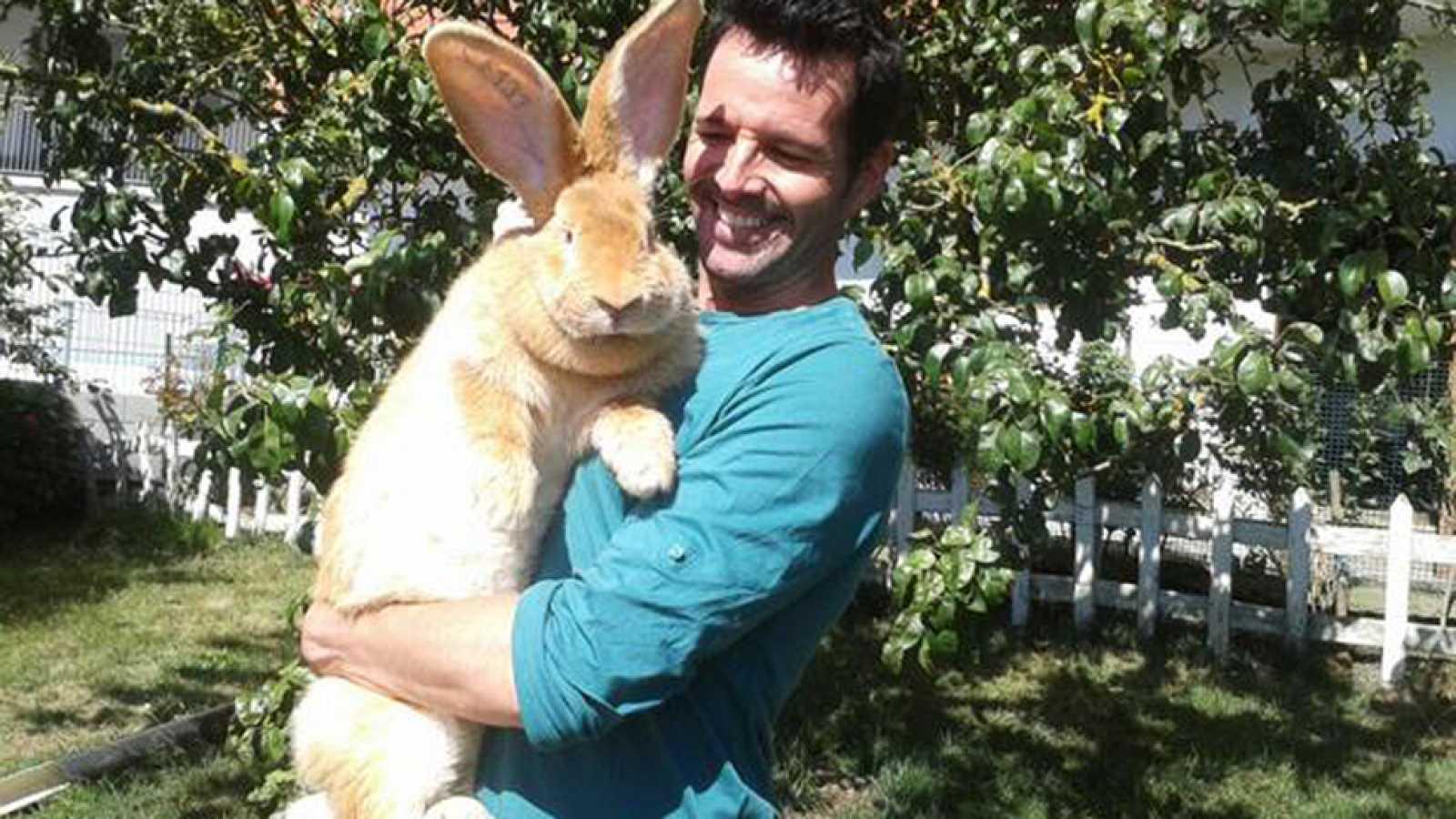 Aquí La Tierra Conejos Gigantes Y No Son De Peluche Rtve Es