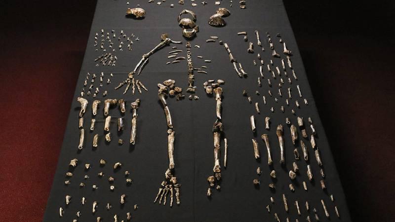 Descubierta una nueva especie de homínido: el 'Homo naledi'