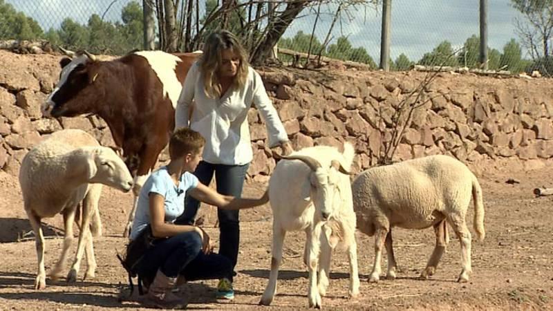 Los Santuarios de Animales, lugares de protección para los animales más desfavorecidos