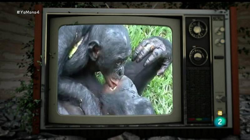 Yo Mono - Sexo, cortejo y descendencia - Ver ahora