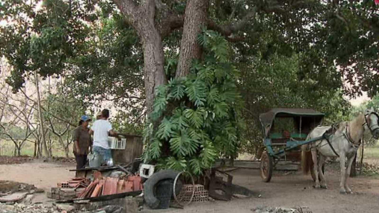 Pueblo de Dios - Araguaia, el fruto de la justicia - ver ahora