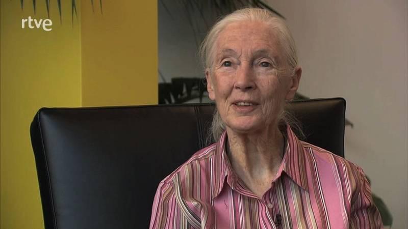 animalades - Jane Goodall recomana animalades