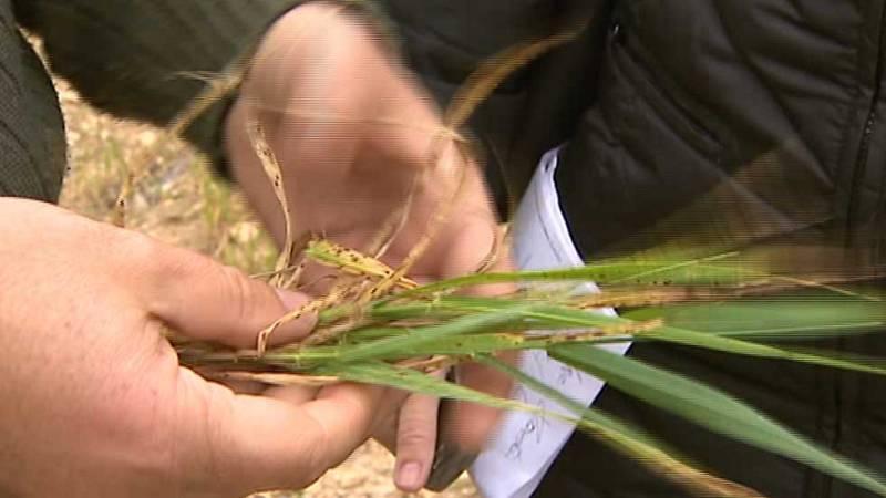 Las altas temperaturas están dejando graves consecuencias en el campo