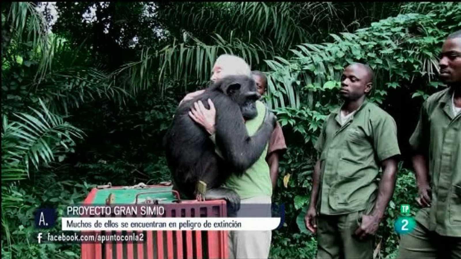 A punto con La 2 - Proyectos solidarios - Derechos de los simios