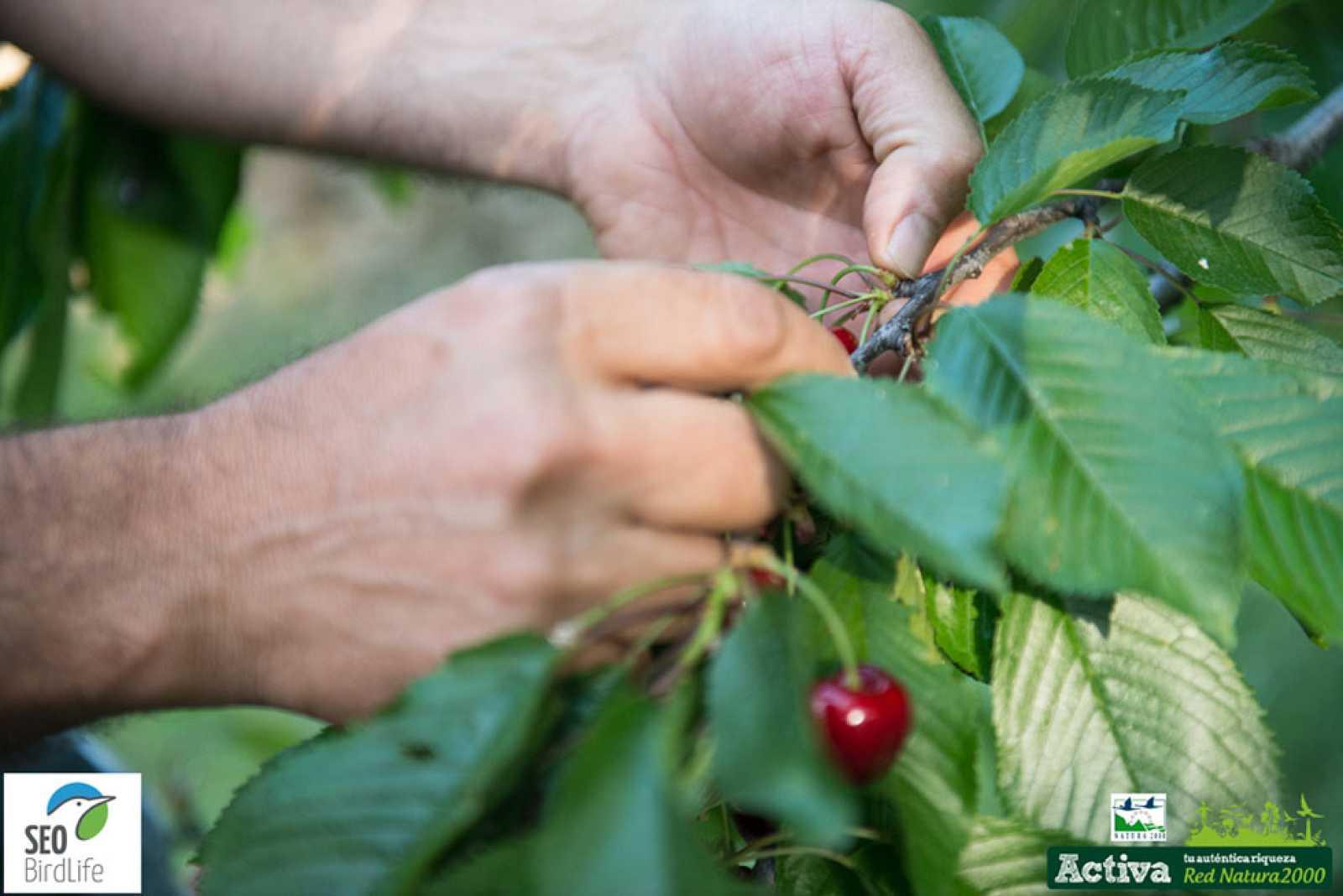 Red Natura 2000 - El Rincón de los cerezos