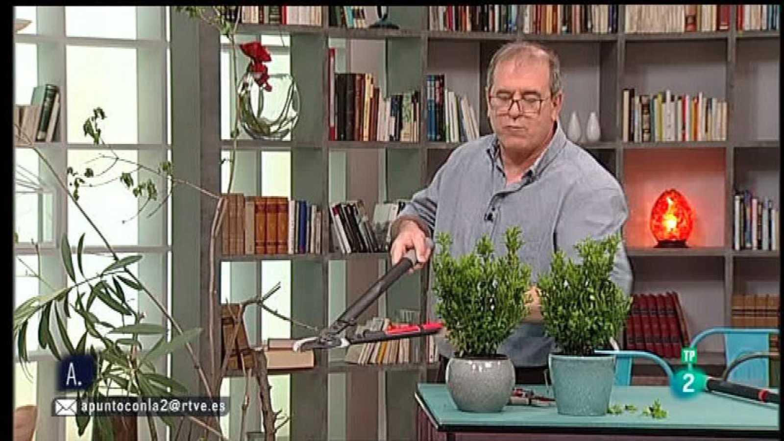 A punto con La 2 - Bricolaje - Nociones y herramientas de jardinería