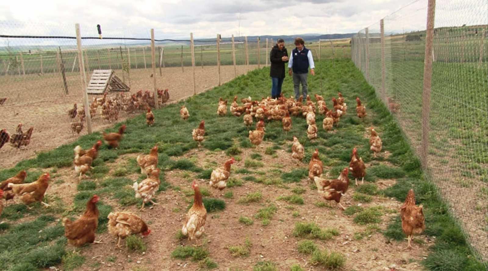 Comando Actualidad Lo Verde Vende Huevos Ecológicos Rtve Es