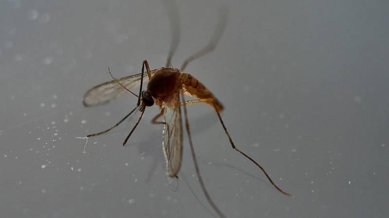 Nuevas tecnologías en la lucha contra el mosquito tigre