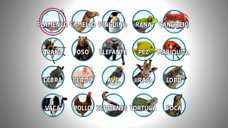 Desafía tu mente - Animales: nombres e imágenes