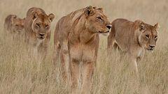 Grandes documentales - El fracaso en la caza: El juego de cazar