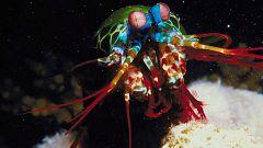Grandes documentales - Velocidad mortal 2: La laguna costera