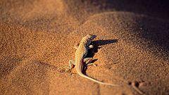 Grandes documentales - Velocidad mortal 2: El desierto