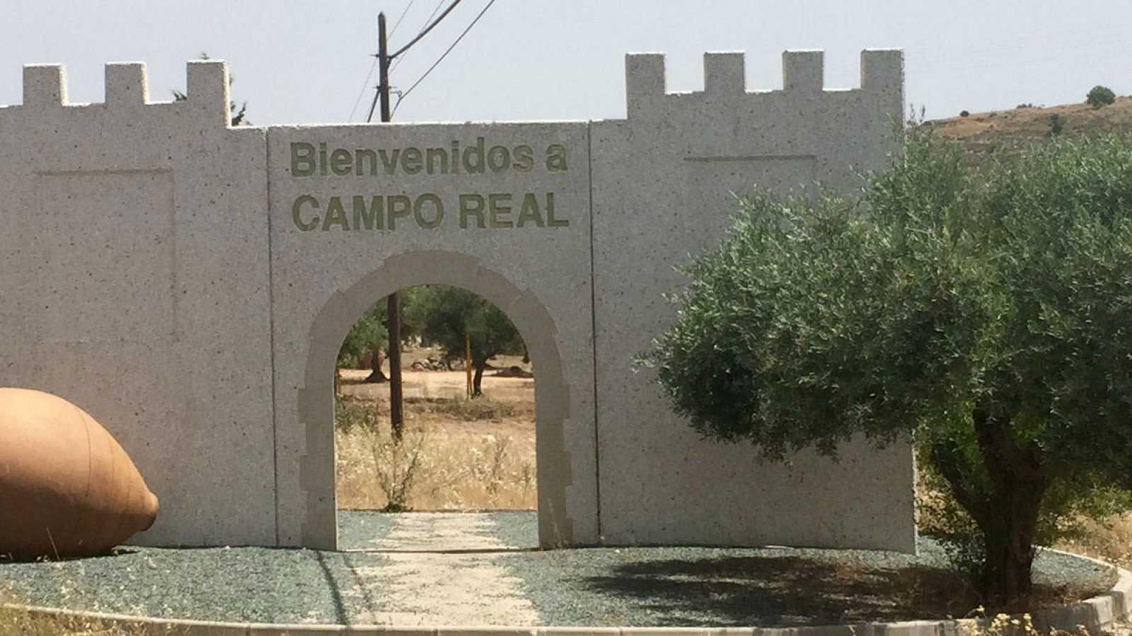 ¿Por qué son especiales las aceitunas de Campo Real?