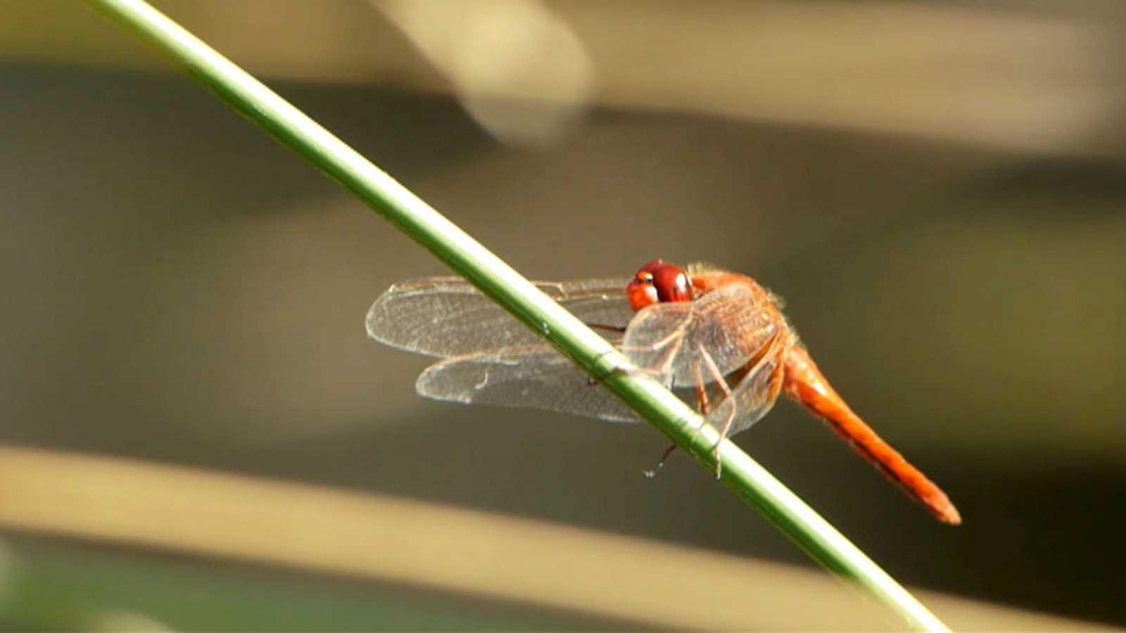 Red Natura 2000 - Biodiversidad - Avance