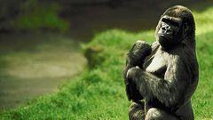 Grandes documentales - Los espíritus del Congo