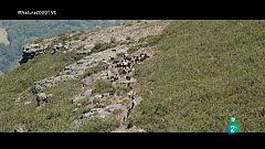 Red Natura 2000 - Segundo. Pastoreo