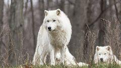 Grandes documentales - El Ártico más salvaje: El océano ártico, el mar helado