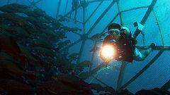 Grandes documentales - La Tierra. Un nuevo entorno natural: Océanos