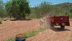 Red Natura 2000 - Historias: Jordi Serra, agricultor ecológico
