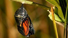 Grandes documentales - Las grandes migraciones. El instinto de reproducción