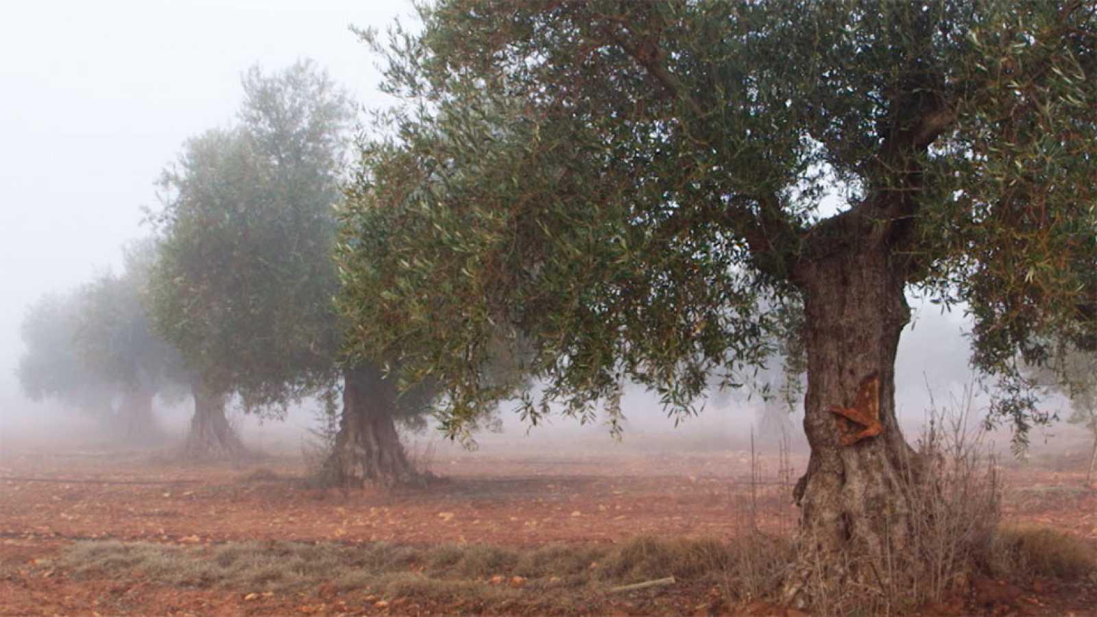 Red Natura 2000 - La Albufera de Valencia, La laguna de el Taray Y Áreas esteparias de Campo de Montiel - Avance