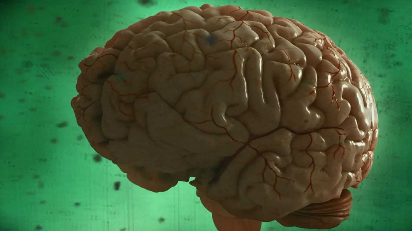 Desafía tu mente - El cerebro es el órgano de la adaptación