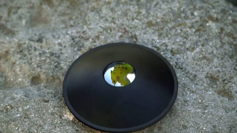 Desafía tu mente - ¿Una rana de goma real o una ilusión?