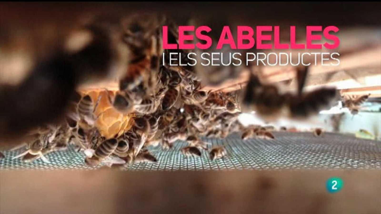 Amb identitat - La mel, un producte de grans propietats