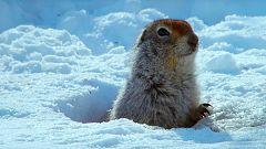 Grandes documentales - Alaska Salvaje: Invierno