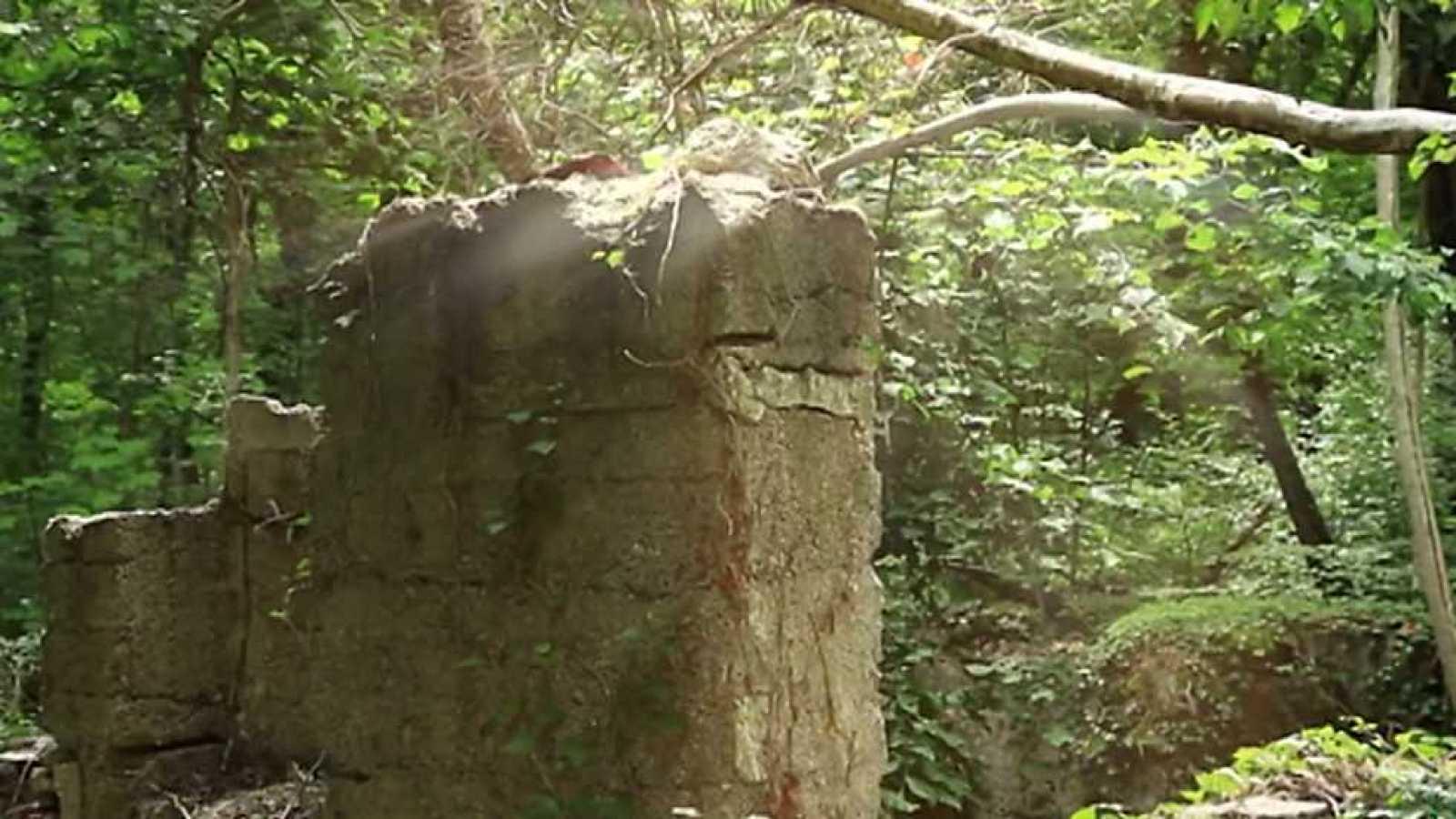 El bosque protector - Bosques de la guerra - ver ahora