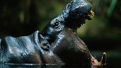 Grandes documentales - África Salvaje: La charca de los hipopótamos