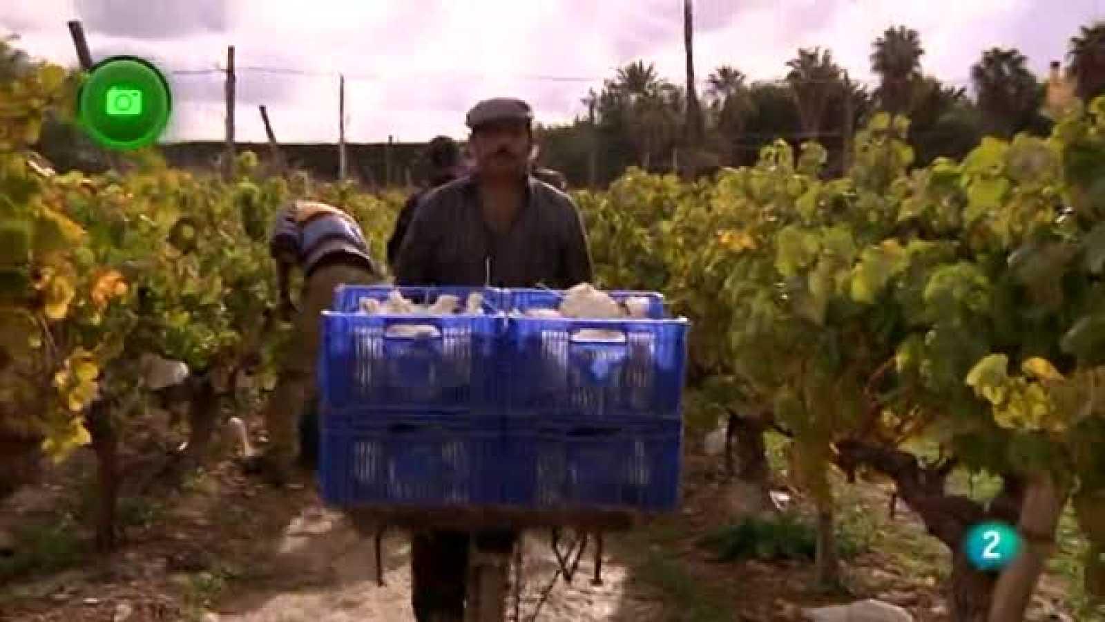 Agrosfera - En clave rural - Novelda, Alicante