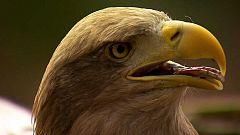 Grandes documentales - Águilas, Reinas de los cielos