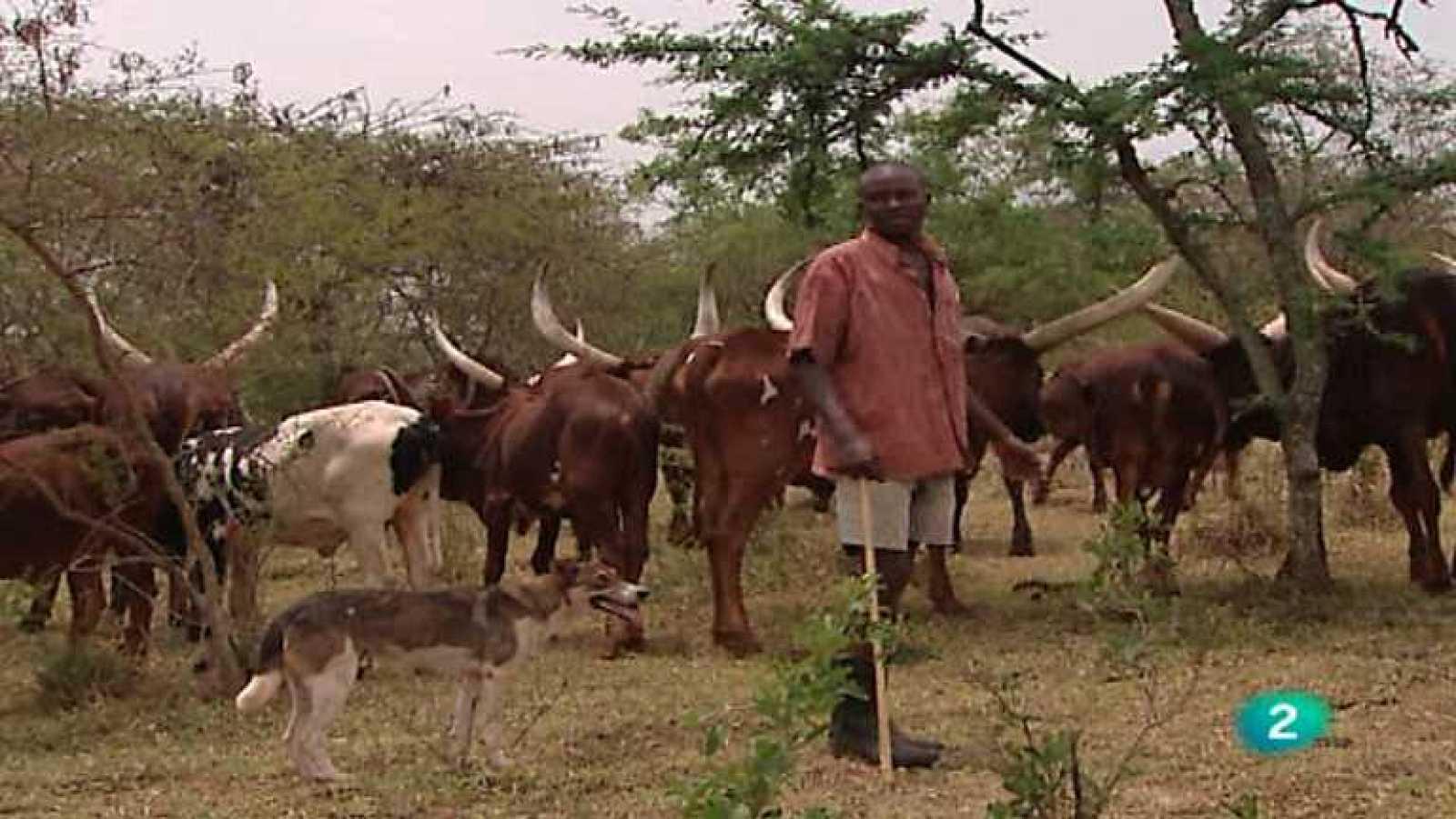 Otros pueblos - Del Nilo Blanco al reino Ankole - ver ahora