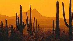 Grandes documentales - Parques nacionales norteamericanos: Saguaro