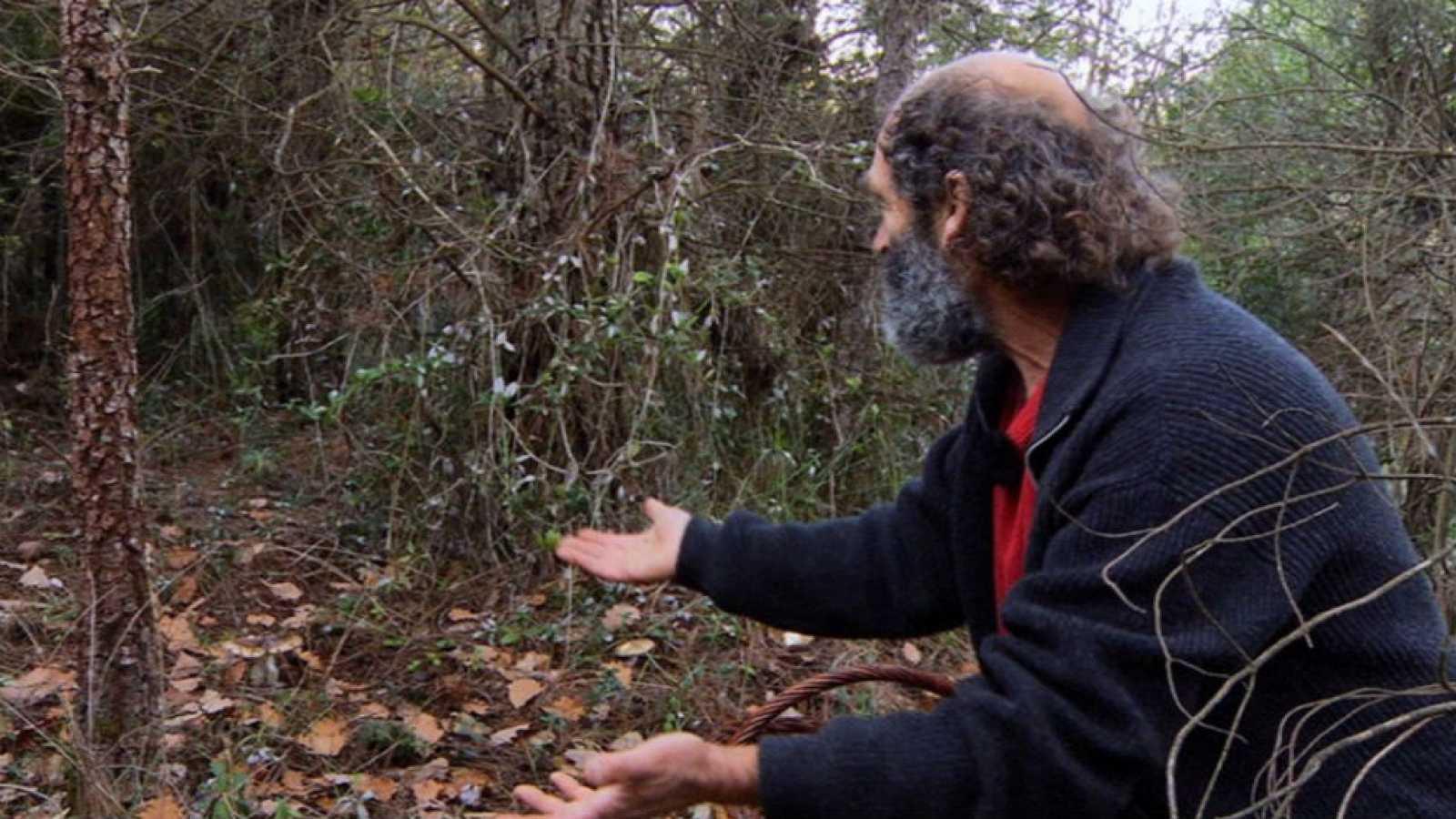 El señor de los bosques, entre setas