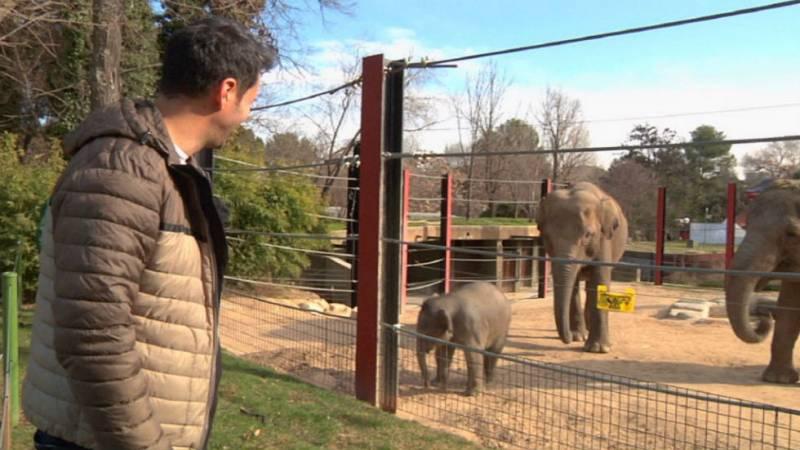 Lo que no sabías de los elefantes