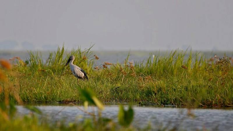 En el Día mundial de los humedales científicos y ecologistas avisan de las múltiples amenazas que padecen
