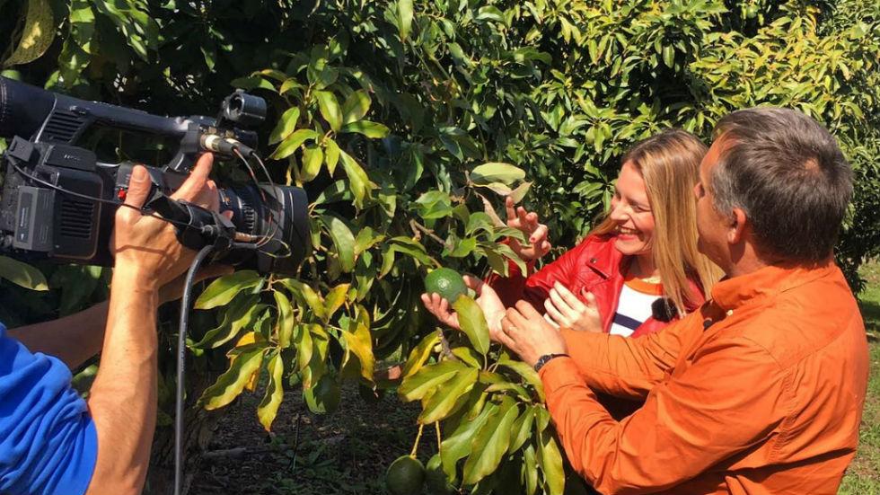 Qué Frutas Exóticas Crecen En España