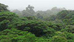 La selva tropical nubosa, en 'Planeta Selva'