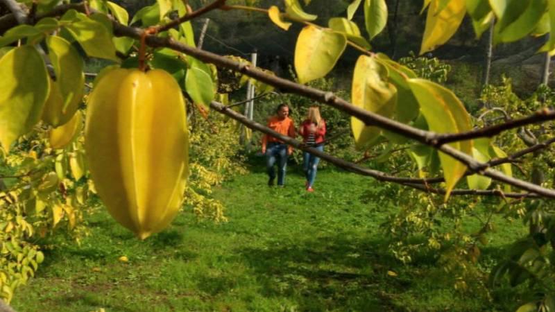 Carambola, moringa y otras frutas exóticas