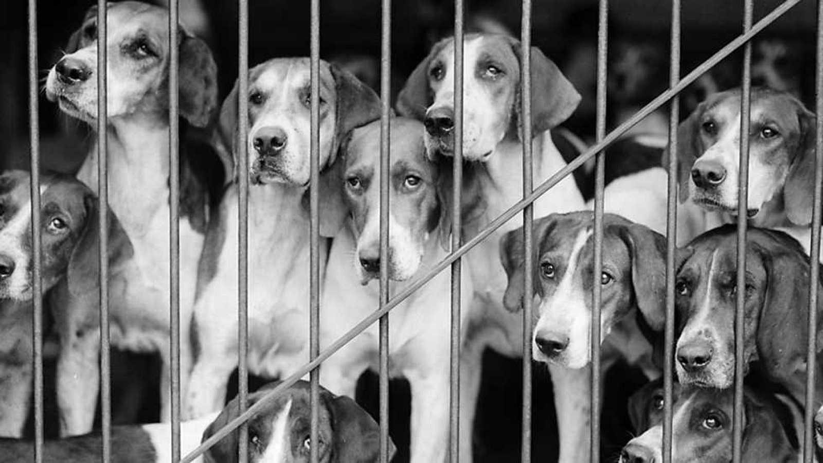 Informe semanal - En defensa animal - ver ahora